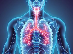 Chest anatomy chest physiotherapy